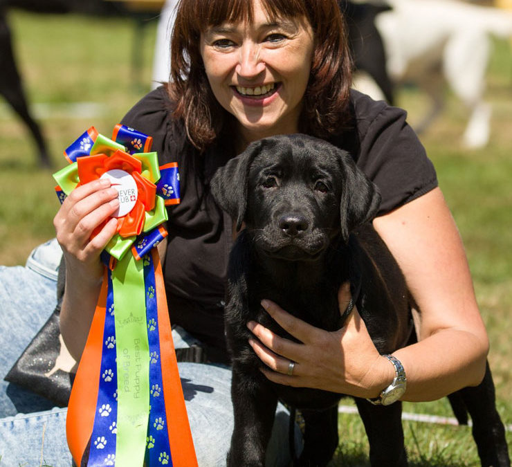 Retriever Club Show Swiss in Burgdorf