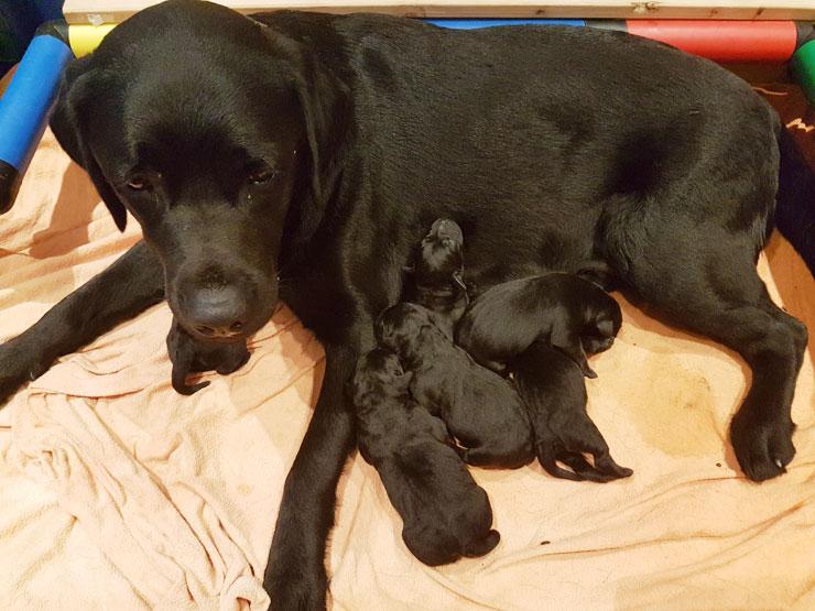 Kisha und Shadow sind Eltern geworden!